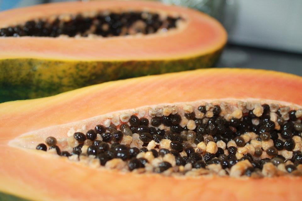 Carica papaya - papaia